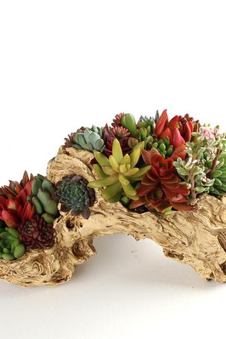 Home Decoration Arch-Shaped Succulent Flower Pot Hand-Painted Resin Large-Caliber Plant Potted Flower Pot